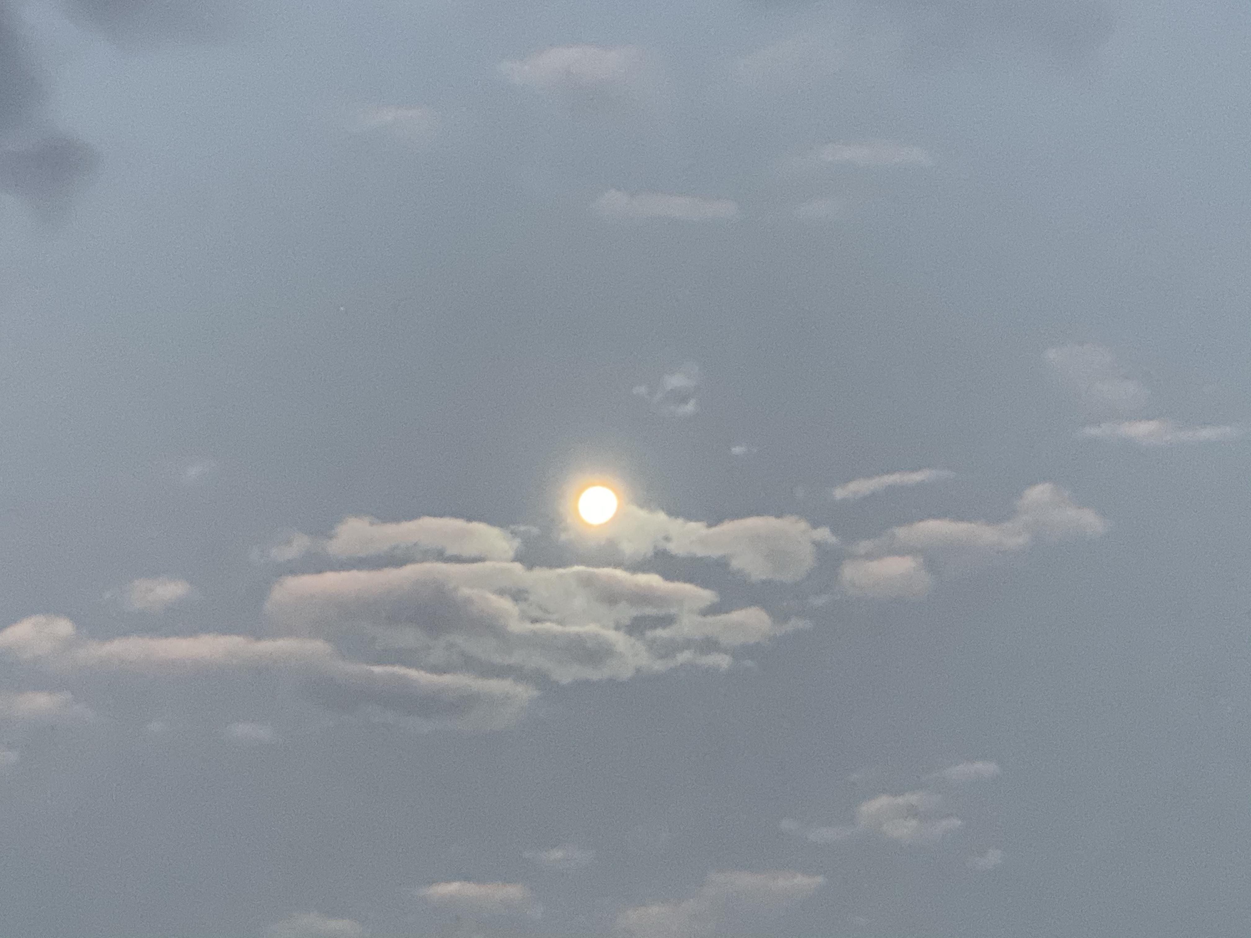 朝見る月もいいもんだ!